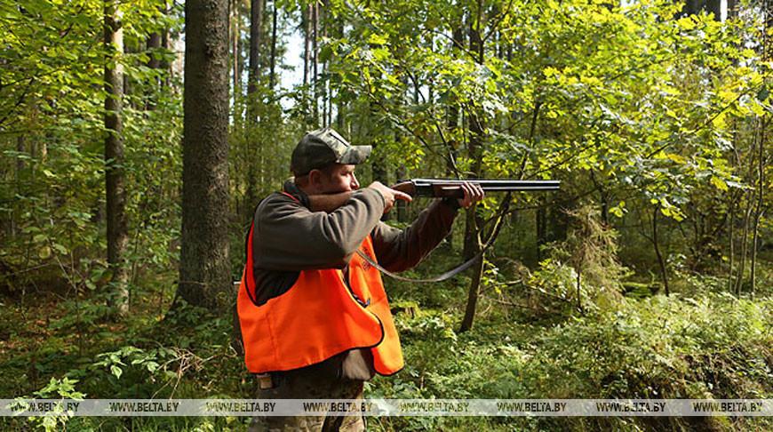 20 августа открывается сезон охоты на лося, оленя и лань
