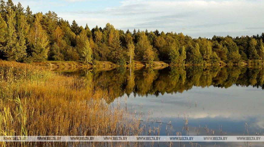 Акцию «Чистый лес» поддержали более 40 тыс. человек