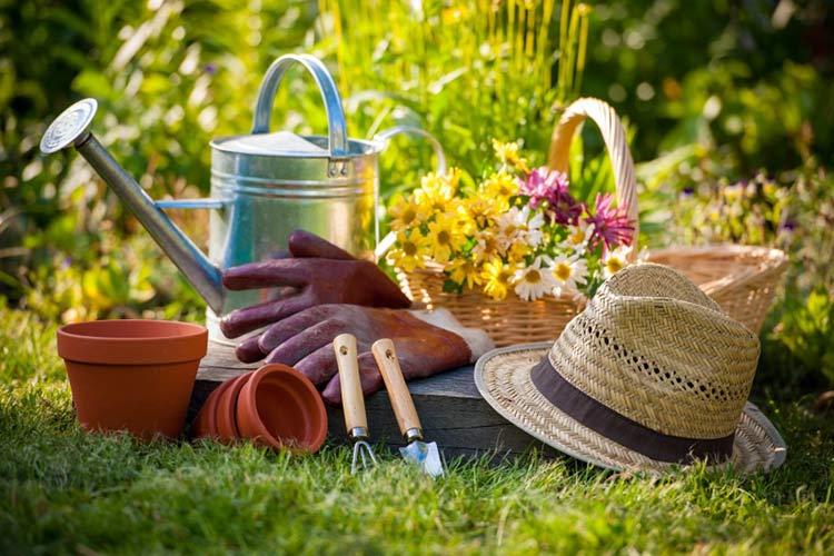 Лунный календарь на июнь. Когда лучше проводить подкормку и заниматься посадкой овощей?