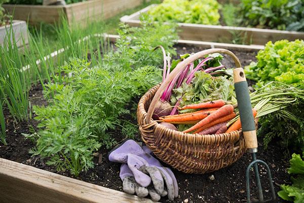 Льготы садоводам и огородникам? С кого не будут взимать земельный налог