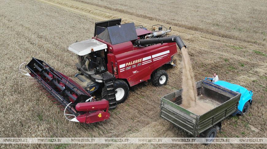 Белорусские аграрии намолотили более 5 млн т зерна