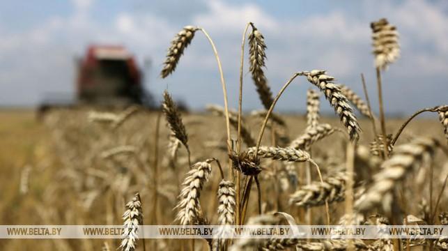 Белорусские аграрии намолотили более 5,7 млн т зерна