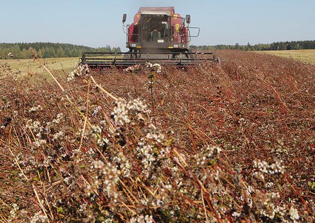 Урожай зерновых на 94%. В хозяйствах приступили к уборке гречихи и проса