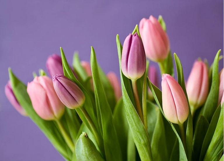 С 8 Марта! Поздравление Белорусского союза женщин