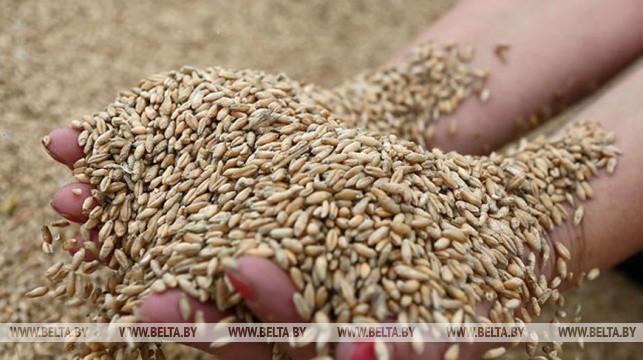 Поставка зерна по госзаказу в Беларуси выполнена более чем на 80%