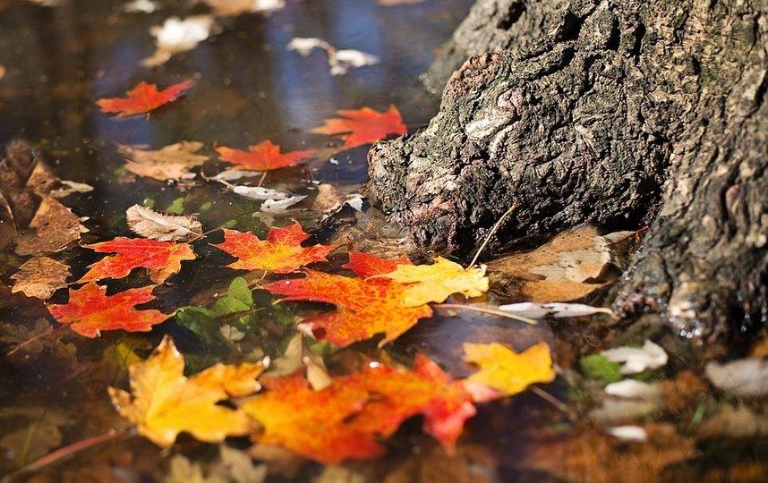 Названа серьезная опасность опавшей листвы для аллергиков