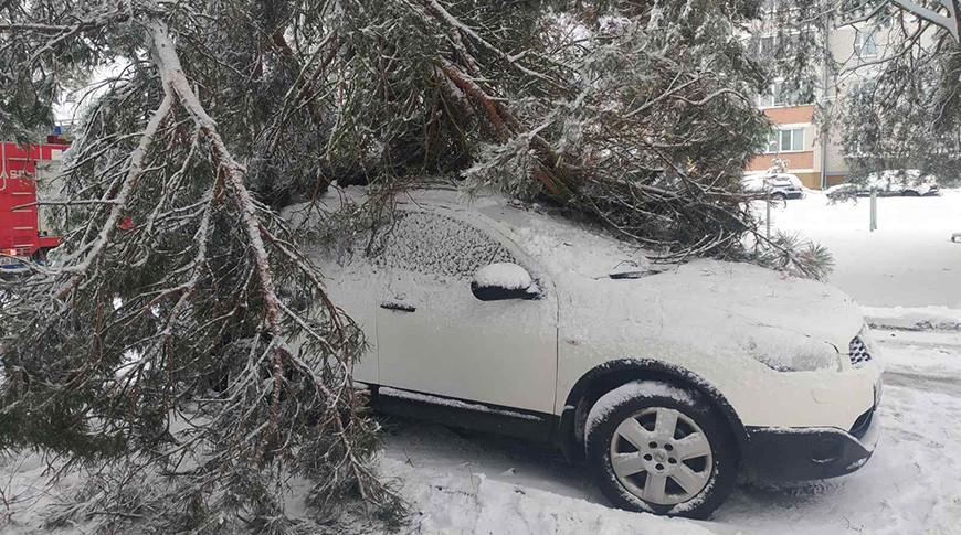 В Беларуси за сутки упавшими деревьями повреждены 11 автомобилей