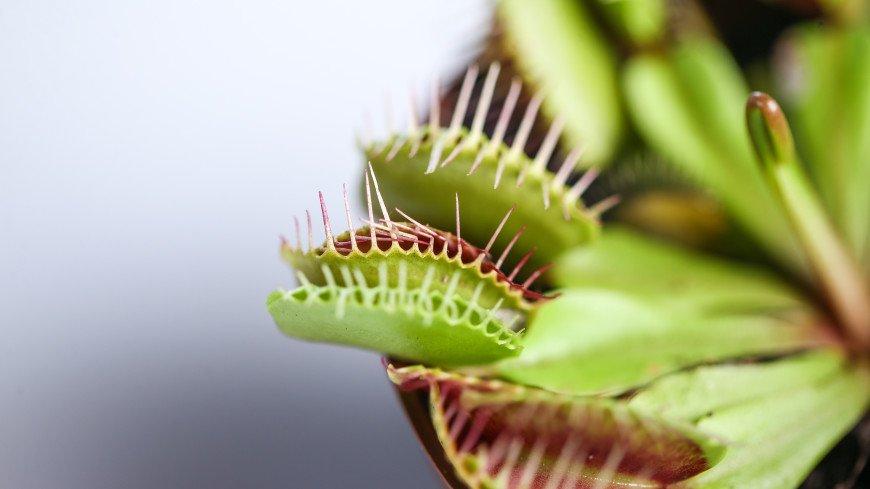 У растений нашли способность к разумному мышлению