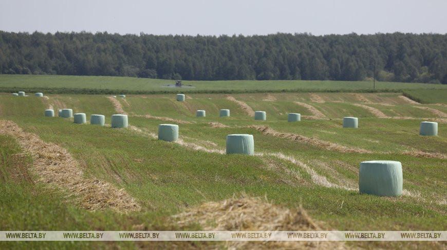 Первый укос трав проведен в Беларуси на 71,4% площадей