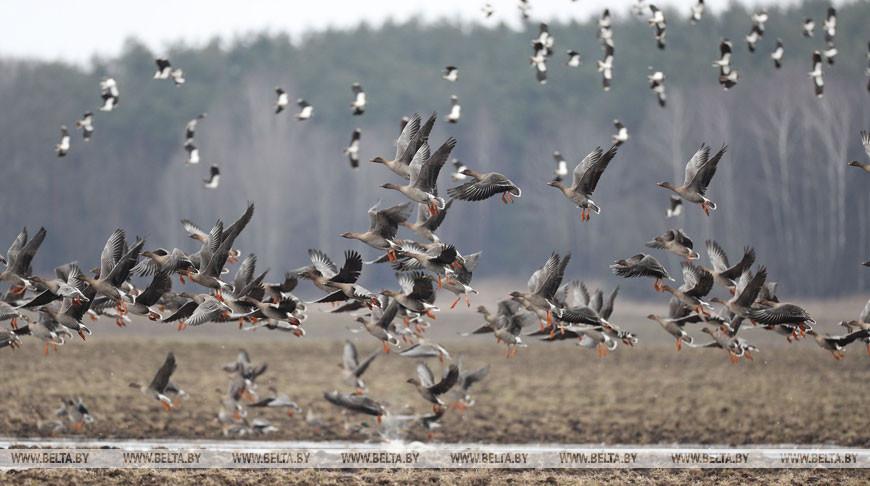 Сезон массовой охоты на пернатых открывается 8 августа