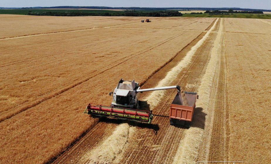 Белорусские аграрии намолотили более 2,1 млн т зерна