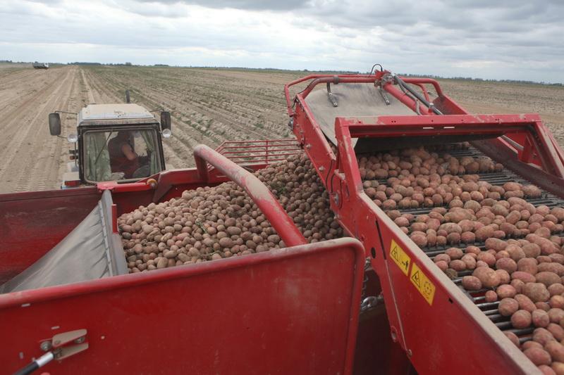 Уборка картофеля началась в Беларуси
