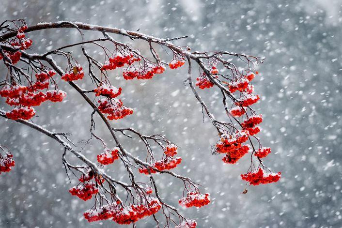 Мокрый снег, туманы, гололед. Какой будет погода на этой неделе?
