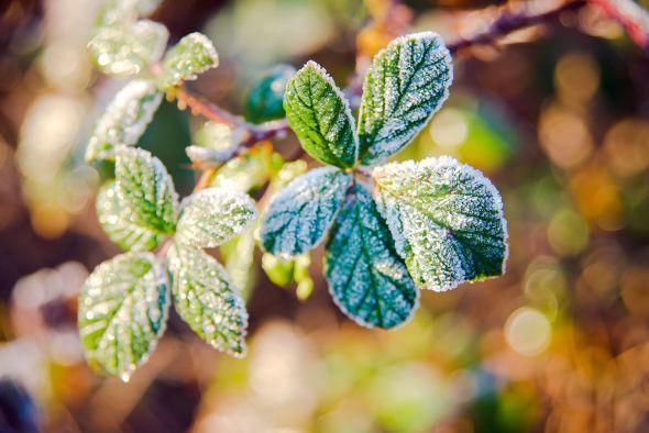 Неустойчивая погода с ночными заморозками ожидается в Беларуси на этой неделе