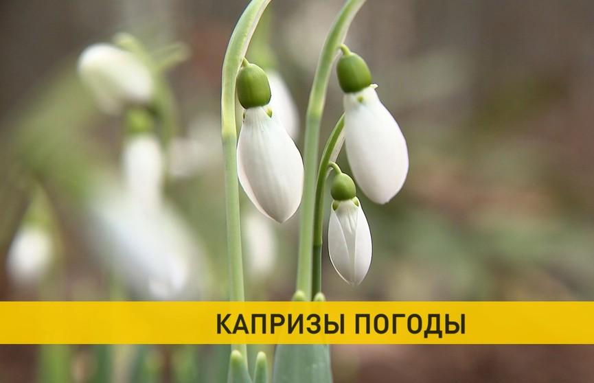 Температурный рекорд побит в Беларуси: 28 марта воздух прогрелся до +18,5°C