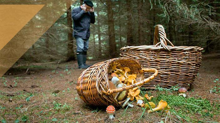 Как избежать грибных отравлений? Пять главных правил