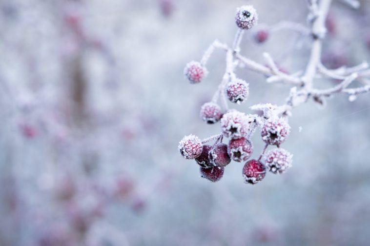 Сильные морозы придут в Беларусь только в феврале