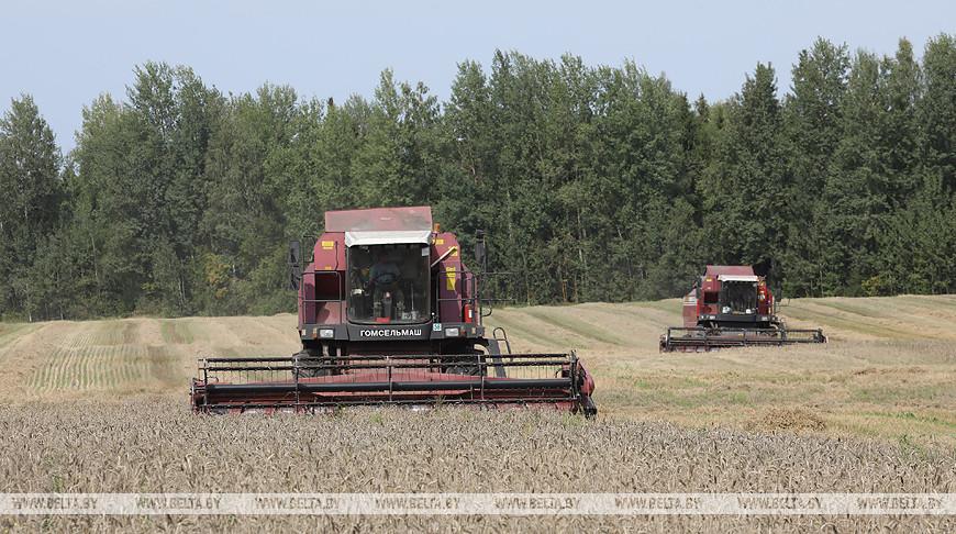 Белорусские аграрии намолотили почти 6,5 млн т зерна