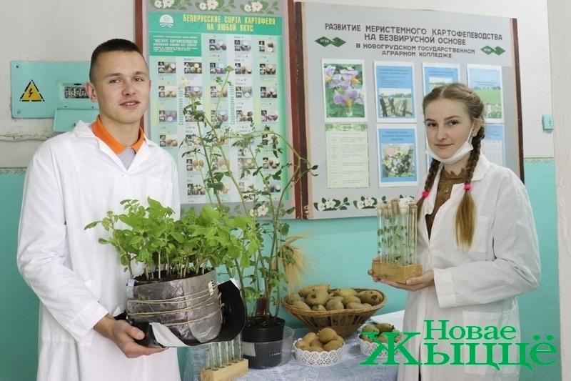 """""""Картофель для нашего учреждения стал брендом"""". В Новогрудском аграрном колледже овощ выращивают из пробирки"""