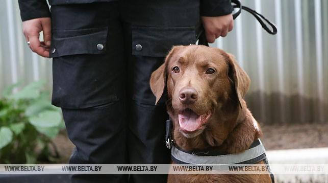 Около 100 служебных собак задействованы для охраны порядка на объектах II Европейских игр