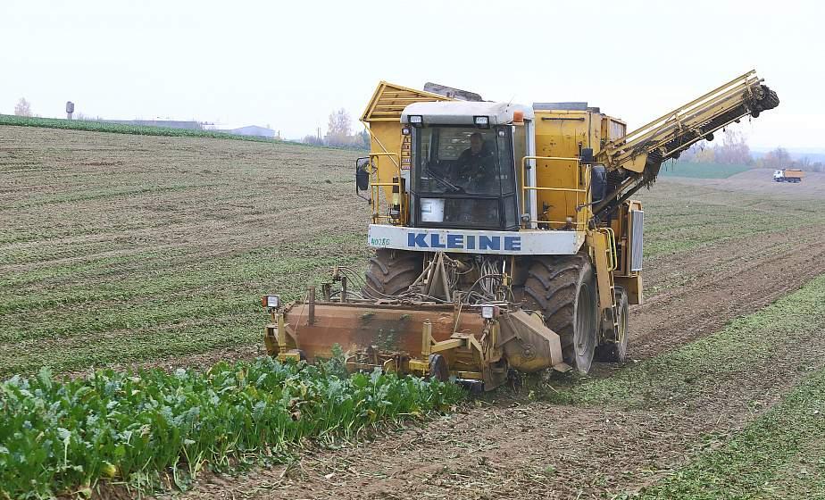 СПК «Гродненский» – в лидерах жатвы. Чем живет хозяйство сегодня и как получает богатый урожай?