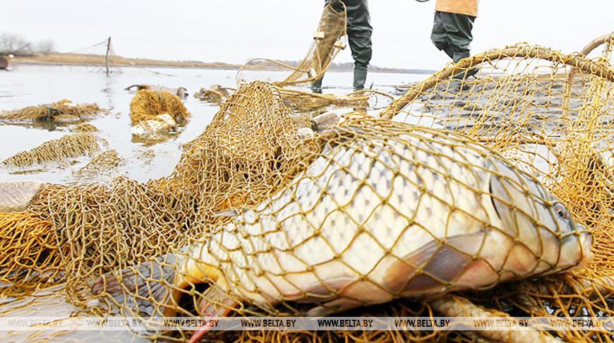 Рейды по контролю за соблюдением правил рыболовства будут проходить без предупреждения