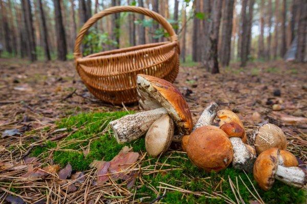 Профилактика отравлений грибами. Инфографика