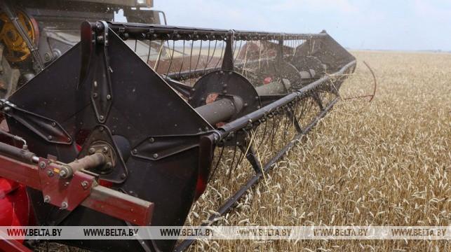 Белорусские аграрии намолотили более 5,5 млн т зерна