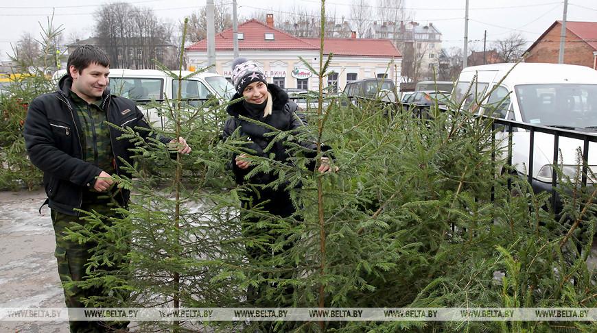 Лесхозы Беларуси продали уже более 67 тыс. новогодних деревьев