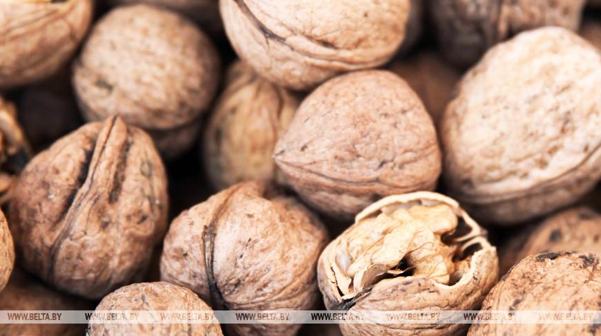 В Беларуси закладываются плантации фундука и грецкого ореха