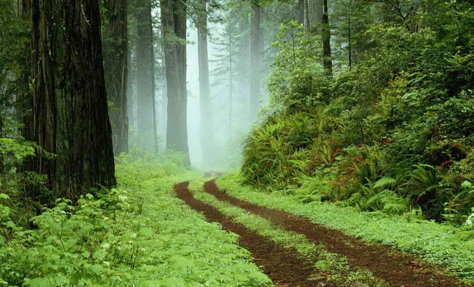 Более 880 лесных пожаров произошло в Беларуси с начала года