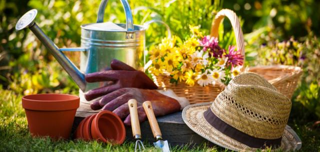 Сбор урожая, полив и... посадка. Работы в саду в конце июля - начале августа