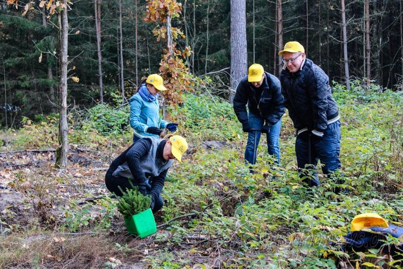 Добровольная акция «Чистый лес»  пройдет на Гродненщине 17 октября