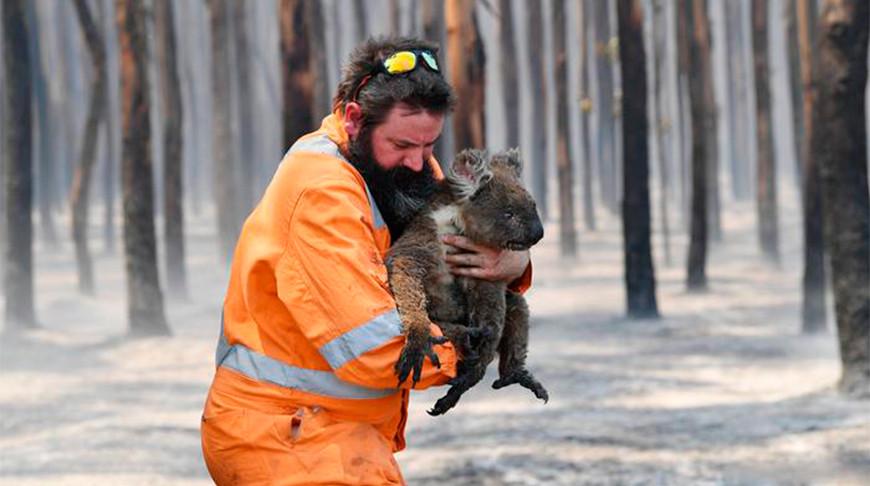 Более 1 млрд животных погибли в результате лесных пожаров в Австралии