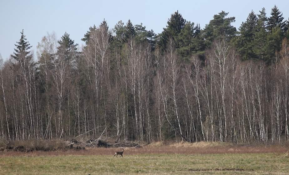 Запрет на посещение лесов введен в 84 районах