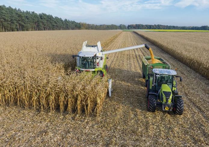Гродненская область лидирует в республике по урожайности зерна кукурузы