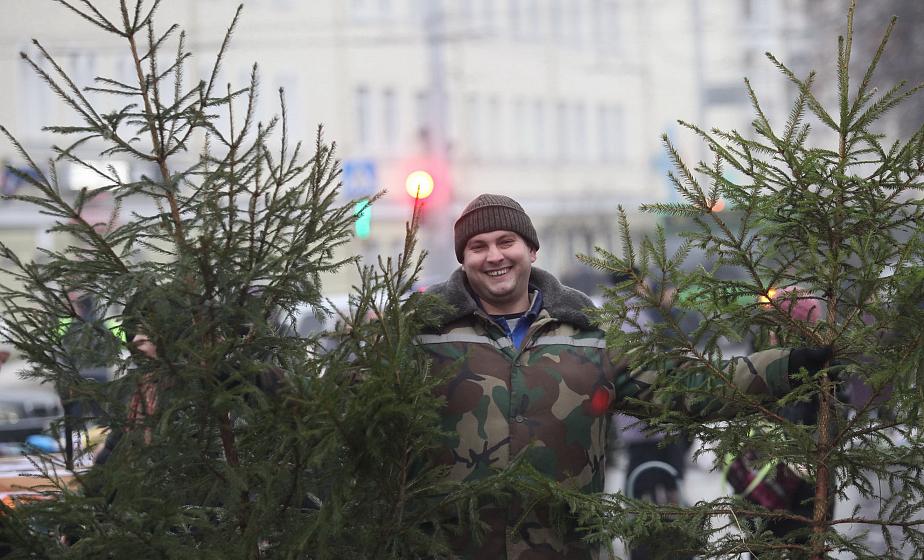 Когда начнут работать елочные базары в Гродно и сколько стоит новогоднее деревце?