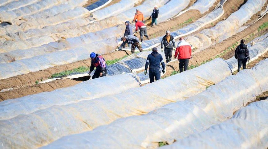 Германия разрешит въезд в страну 80 тыс. трудовых мигрантов