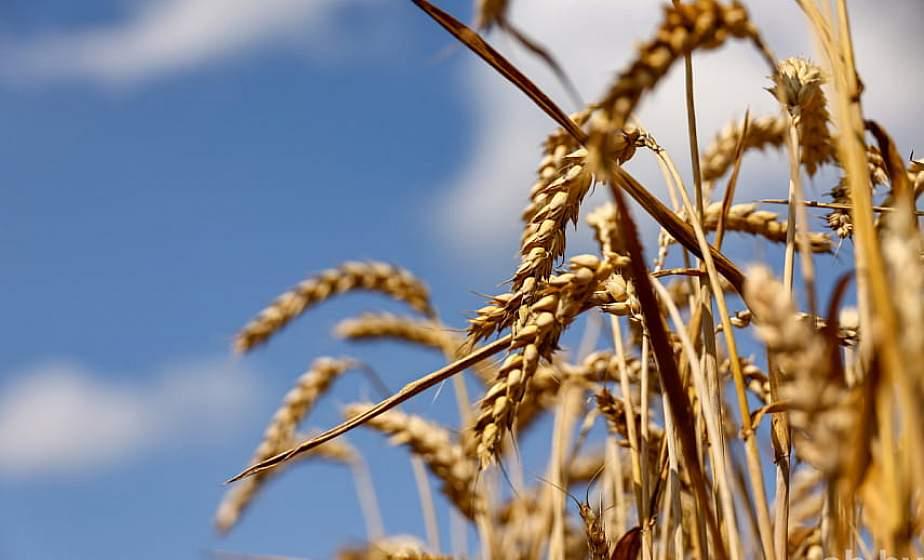 В Беларуси намолочено пять миллионов тонн зерна