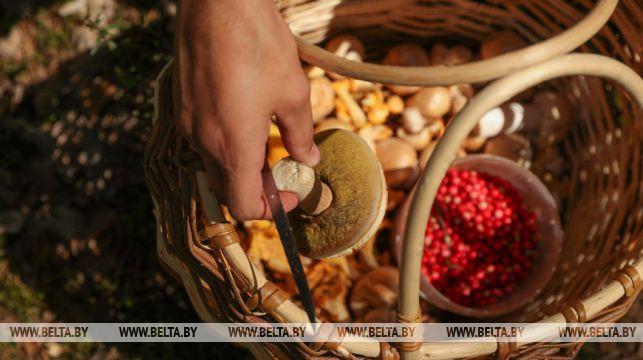 В Беларуси с начала года от отравления грибами пострадали 37 человек