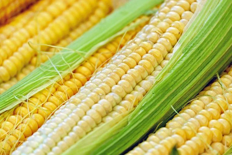 Советы дачникам: как самим вырастить богатый урожай кукурузы в открытом грунте