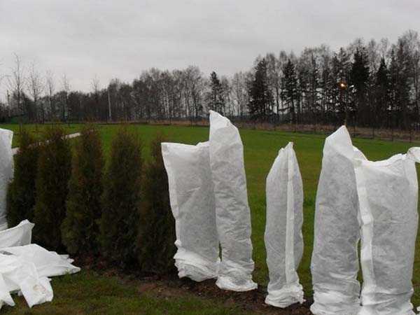 Холода близко. Как укрыть растения на зиму