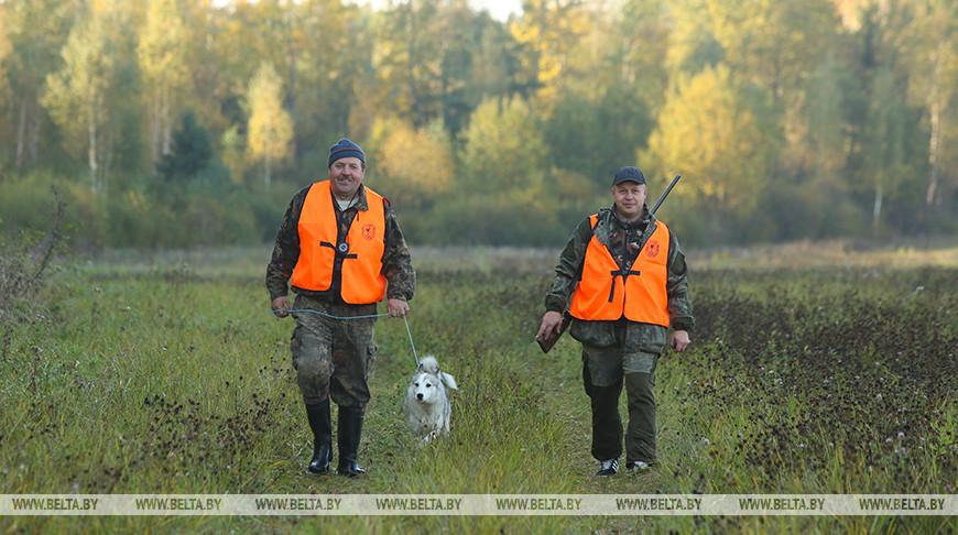 Сезон охоты на пушных животных открывается в Беларуси 2 ноября