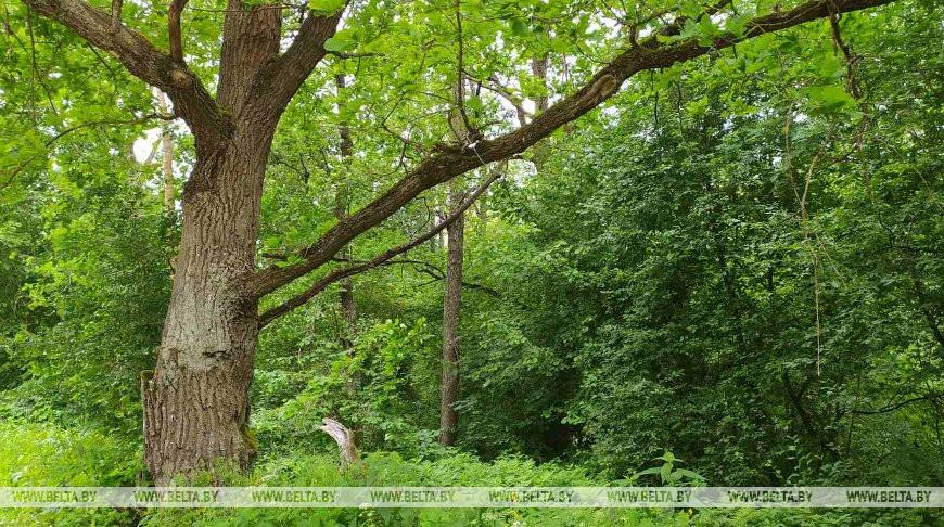 Запреты и ограничения на посещение лесов действуют в 53 районах Беларуси