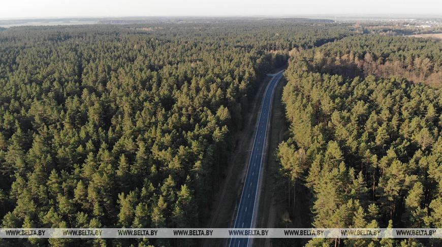 В Беларуси будут постепенно снимать запреты на посещение лесов