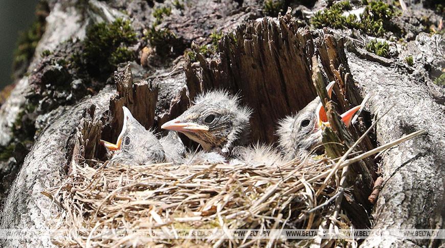 В АПБ рассказали, почему нельзя трогать птенцов, выпавших из гнезда