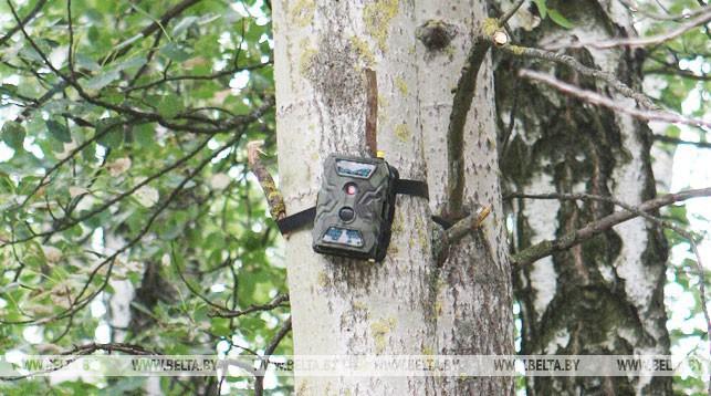 Более 310 лесонарушителей привлекли к ответственности в I полугодии благодаря фотоловушкам