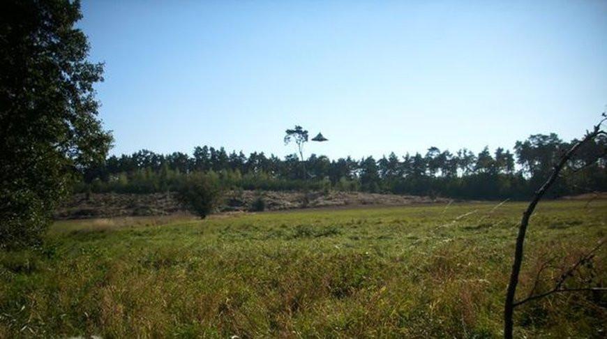 Самое четкое фото НЛО за 40 лет сделали в Польше