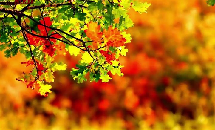 Без осадков и до +16 °С ожидается в Беларуси 28 сентября