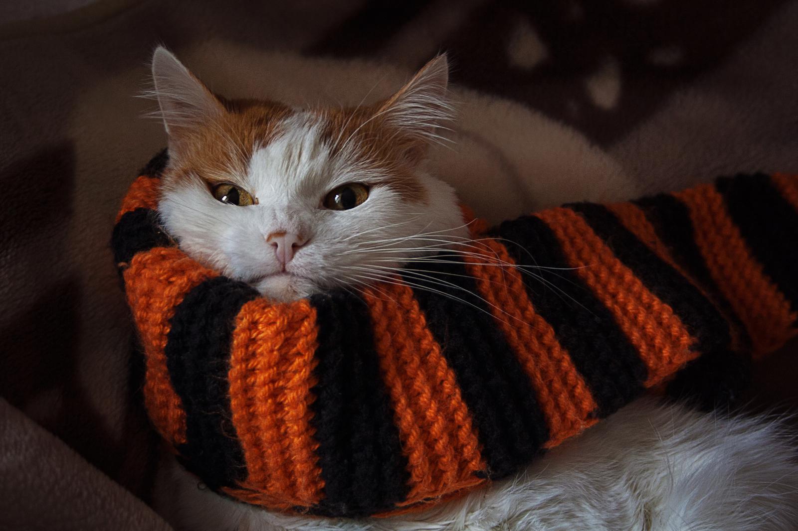 Картинки рыжий кот в шарфе